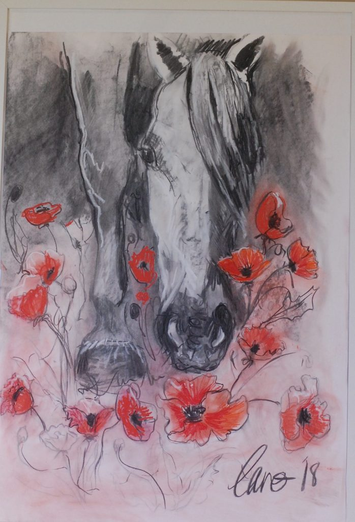 A horse that is grazing in a field of poppies