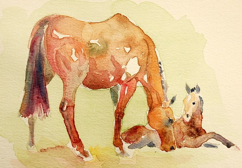 Mare and Foal - 21cm x 30cm. / Watercolour / 2011 £150